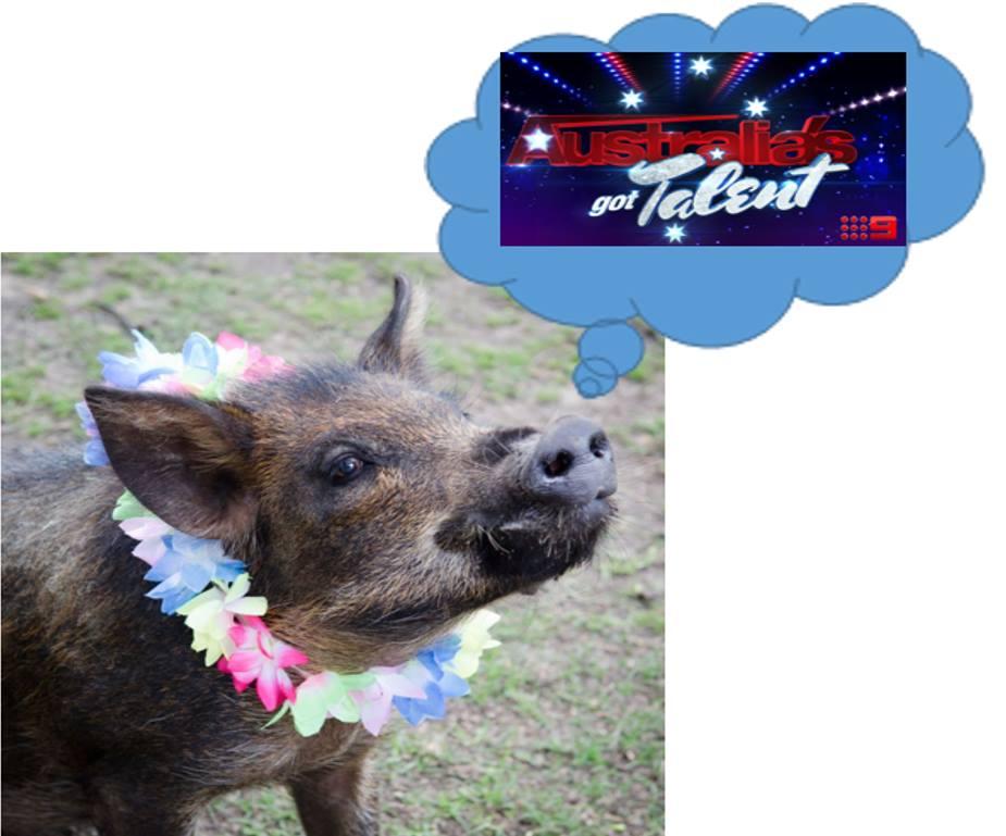 Australia's Got Talent Excitement