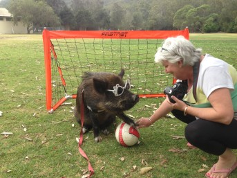 The Truth About Australian Miniature Pigs