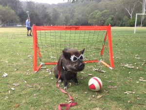Coco_soccer_with_glasses_on