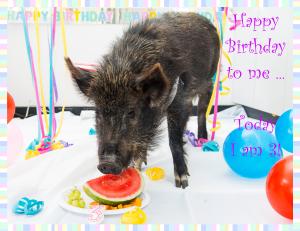 Coco's 3rd Birthday Photo